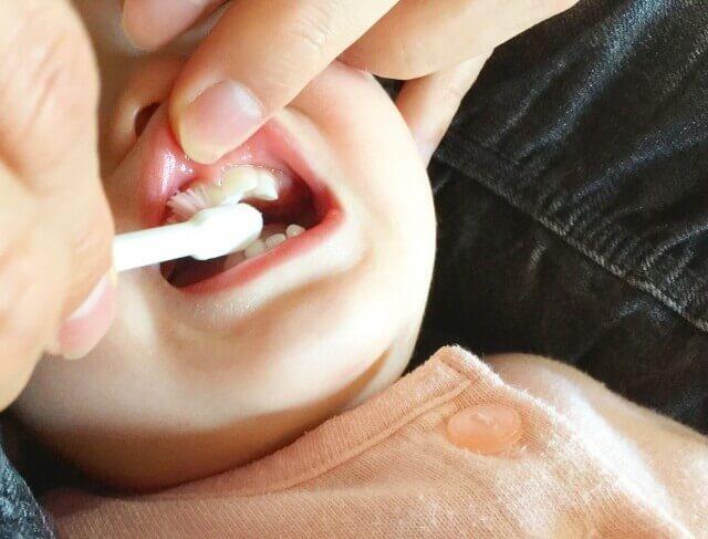 1歳児の歯磨き対策 360度歯ブラシが好感触だったのでおすすめ