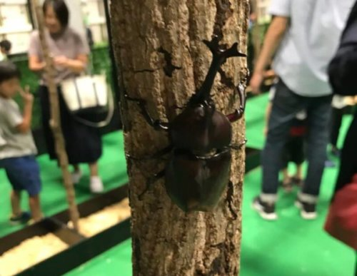【レポ】大昆虫展2018行ってきました|中の様子や混雑状況、感想まとめ