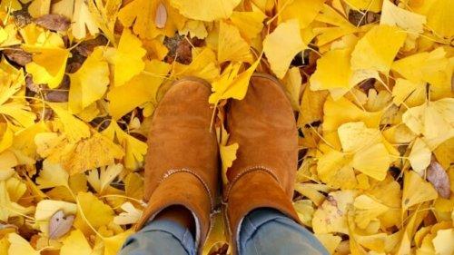 落ち葉と茶色いブーツの写真
